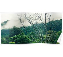 Trees and mountains in Queensland Poster