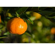 Tangerine Tree Photographic Print