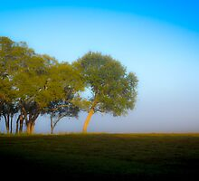 Foggy background of a tree by Douglas Hamilton