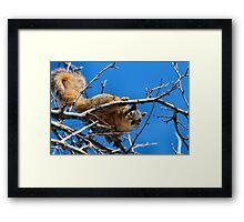 Oh Geez...Call the cops. She's back! Framed Print