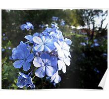Alluring Azure Poster