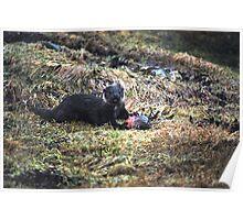 Shetland Otter Poster