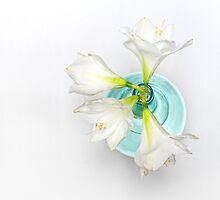 Wonderful white Amaryllis... by Bob Daalder