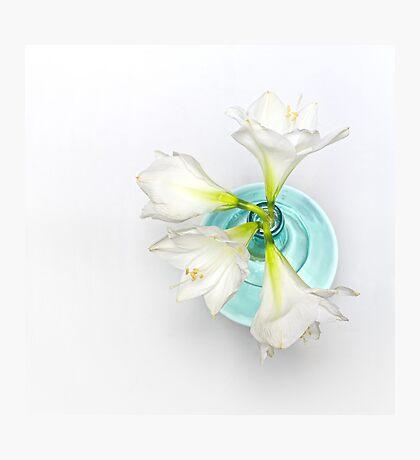 Wonderful white Amaryllis... Photographic Print