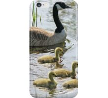 Canada Geese (Branta canadensis) iPhone Case/Skin