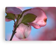 Dogwood Flower Canvas Print