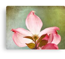 Pretty Dogwood Flower Canvas Print