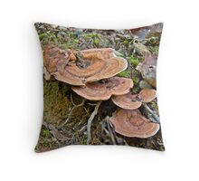 Shiny Cinnamon Polypore - Coltricia cinnamomae - Fungi Throw Pillow