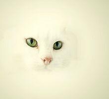 Cat Cloud by Ladymoose