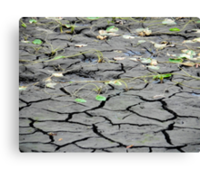 Drought Canvas Print