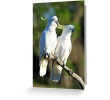 Sulphur Crested Cockatoos. Cedar Creek, Qld, Australia. Greeting Card