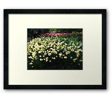 Keukenhof Daffodils Framed Print