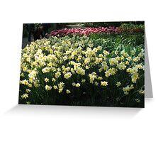 Keukenhof Daffodils Greeting Card
