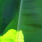 Banana Leaves 7 by Dawn Eshelman