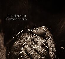 Opposable Thumbs by Jill Hyland