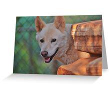 Happy Dingo Greeting Card