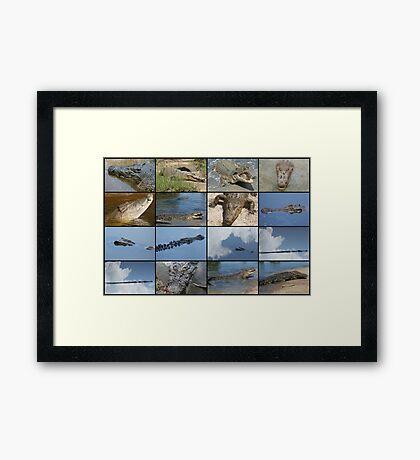 Saltwater Crocodile Framed Print