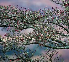 Hawthorn berries against Welsh mountain by nadine henley