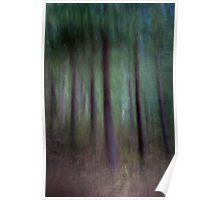 Black Birch Forest Poster
