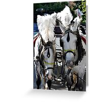 Smart Feathered Ponies Greeting Card