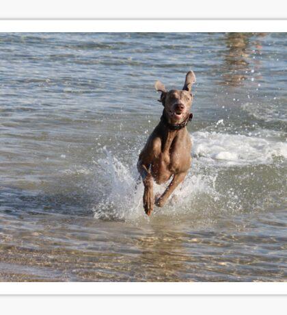 "Beach Dog ""Gerzelda"" Sticker"