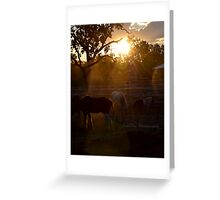 Home Valley Horses Greeting Card