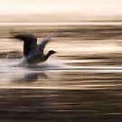 Arty Greylags by Neil Bygrave (NATURELENS)