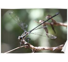Dragonfly up close  Poster