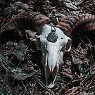 Goat Skull. by mrsaraneae