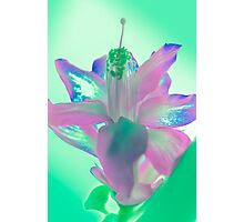 Color by Cactus Photographic Print