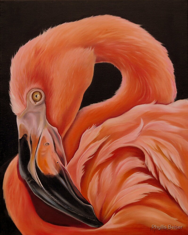 Flamingo Portrait by Phyllis Beiser