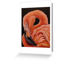 Flamingo Portrait Greeting Card
