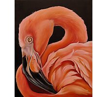 Flamingo Portrait Photographic Print