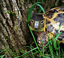 Graduation Tortoise  by Skymall007