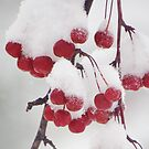 Snow on the Crab Apples by lorilee
