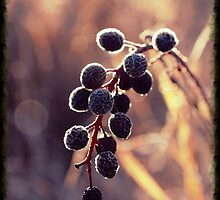 Frozen Berries by Doug Petry