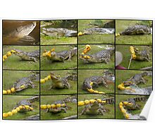 Saltwater Crocodiles Poster