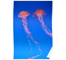 Jelly Fish 2 Poster
