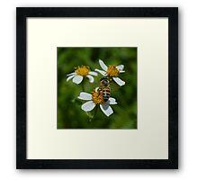 Bee Flower Framed Print