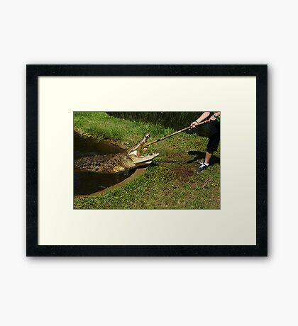 Crocodile Saltwater Framed Print