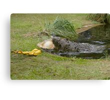 Crocodile Saltwater Canvas Print