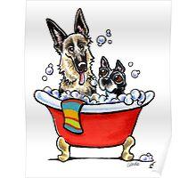 German Shepherd & Boston Terrier in the Bath Poster