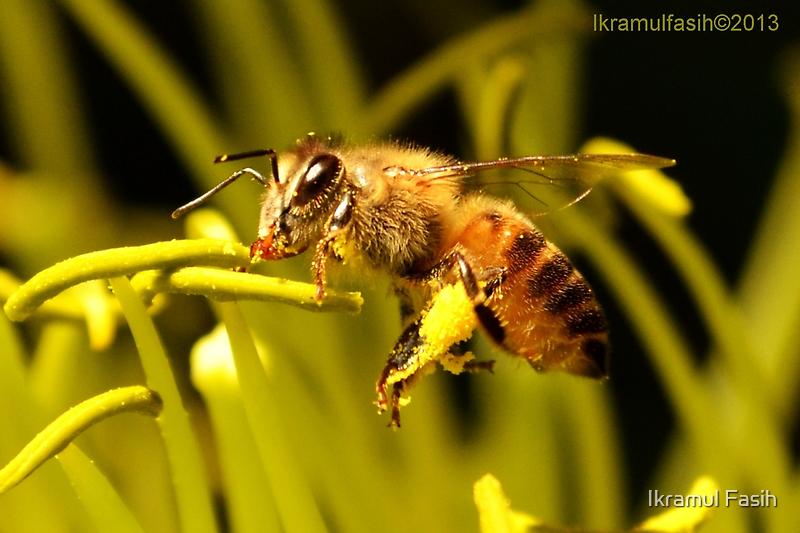 Busy Bee by Ikramul Fasih