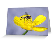 hello buttercup Greeting Card