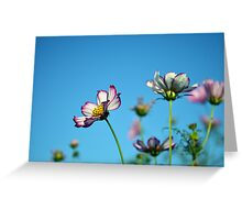 Cosmos Flowers and Blue Sky Greeting Card
