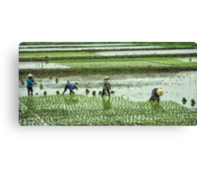 Vietnam: All in A Row Canvas Print