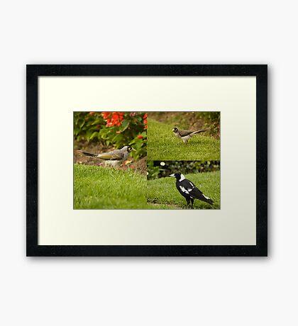 Birds On The Hunt Framed Print