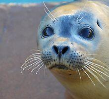 Rescued seal pup by Mark Baldwyn