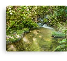 Fishless Stream Canvas Print