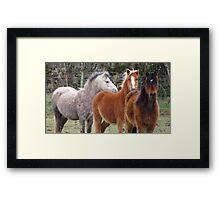 Windswept ponies Framed Print